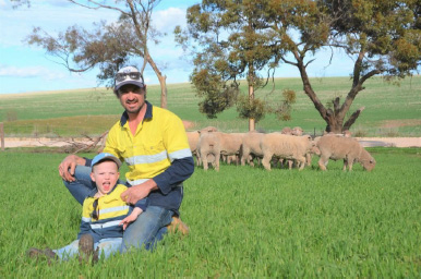Resilient Prime SAMM ewes perform in tough conditions
